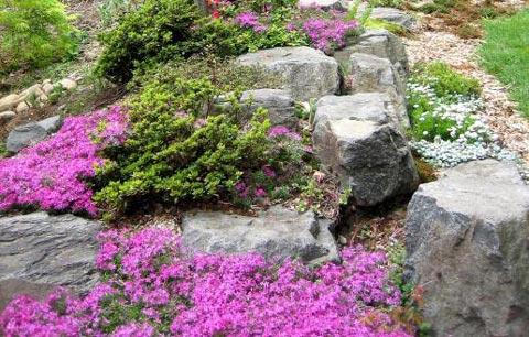 Рокарий – цветник из